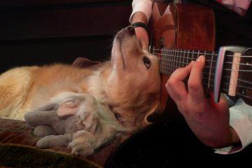 Green Day — Boulevard of Broken Dreams fingerstyle tabs
